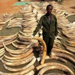 Bonjour dans Environnement ifaw_elephant02-150x150