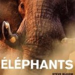 images-elephant-150x150 dans Environnement